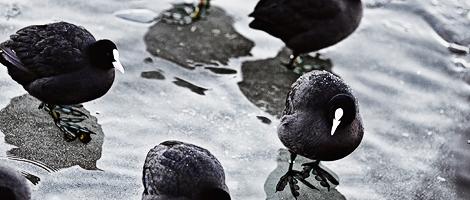 Treptower Park: Eis & Spree